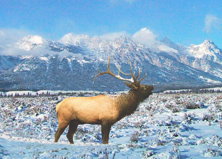 Elk Snow