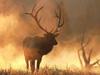 Fire Elk
