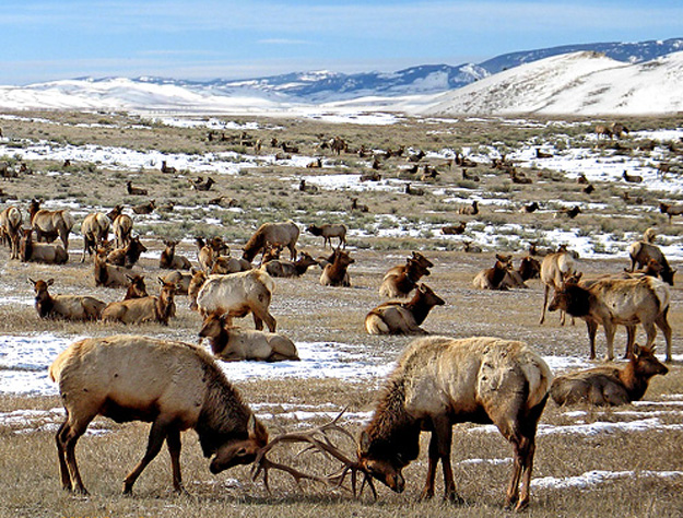 Elk Feedgrounds