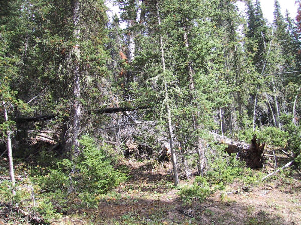 Deadfall major cause of Forest Fires