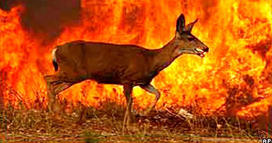 FF-Deer BBC copy