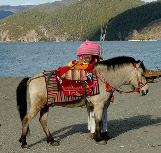 Horse Mongolion