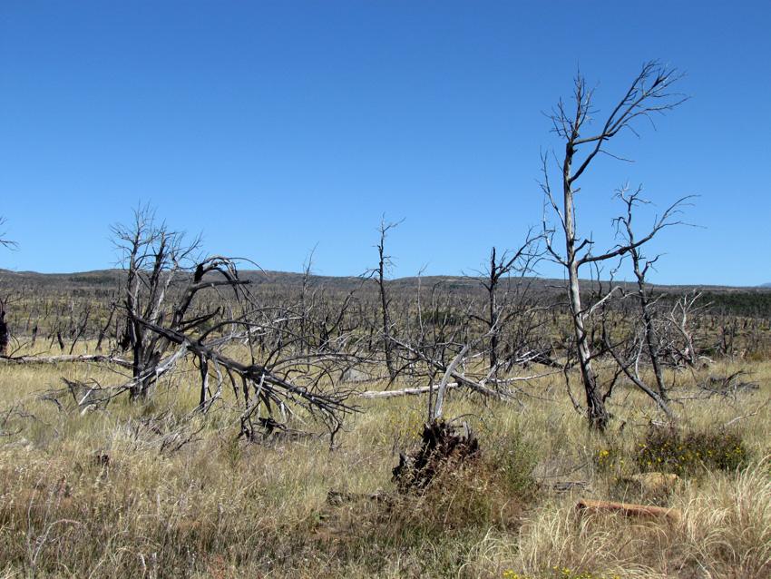 Mesa Verde 2000 fire