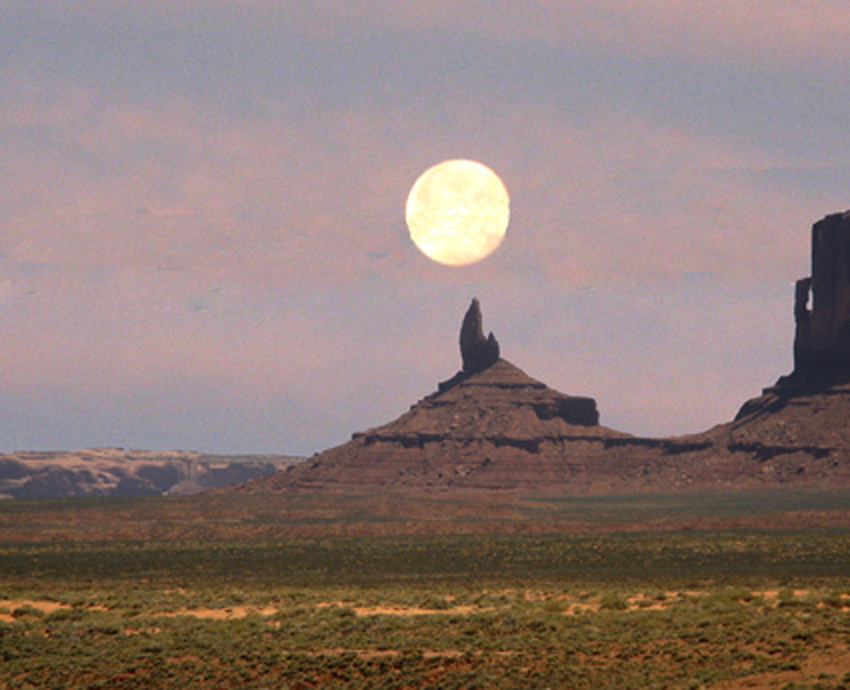 Moon Howling Coyote