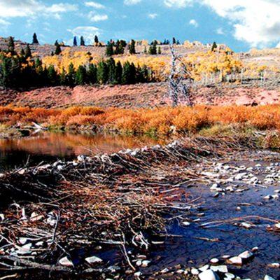 Rock Beaver Dam